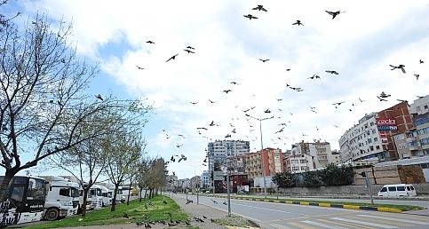Trabzon yasağa riayet etti