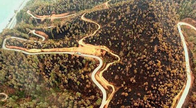 Sürmene'den müjde: Ağaçlar kurtarılabilir