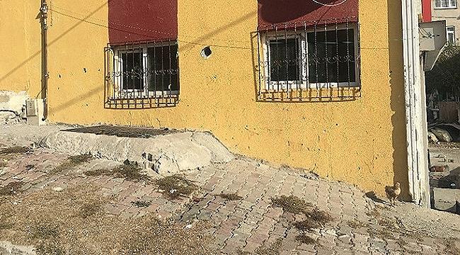 Yunanistan diye Arnavutköy'e bıraktılar