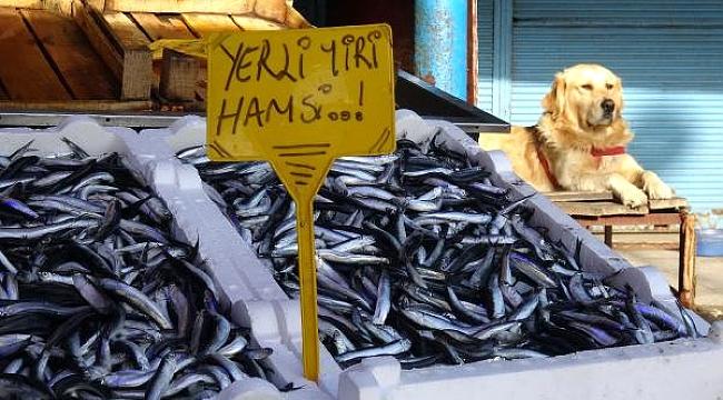 Oscar' Balık Halini Kedilerden Koruyor