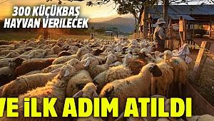 'Köyüne geri dönene 300 koyun' projesi başladı