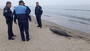 Karadeniz'deki yunus ölümlerinin nedeni belirlendi