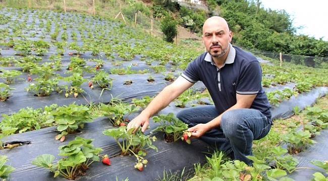 İki Üniversite Bitirdi Organik Çilek Yetiştiriyor