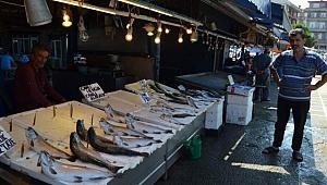 40 yıldır ilk kez oluyor: Denizde balık bitti