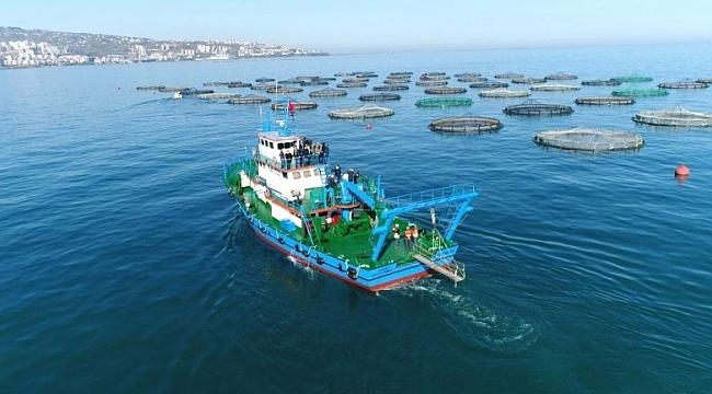 Trabzon, Norveç balığının yerini aldı