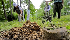 Ormancılar: Dikilen fidanların 8-9 milyonu zayi olacak