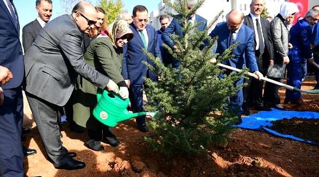 Trabzon'da sabun ağacı dikildi