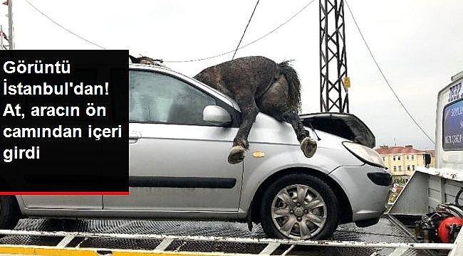 Başıboş at, aracın ön camından içeri girdi