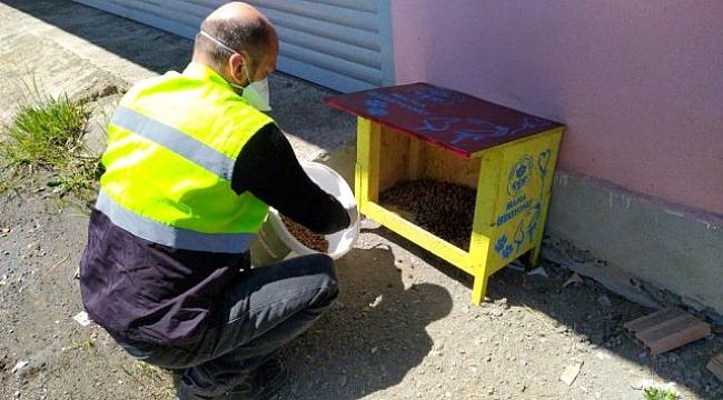 Büyükşehir'in sokak hayvanlarına destekleri sürüyor