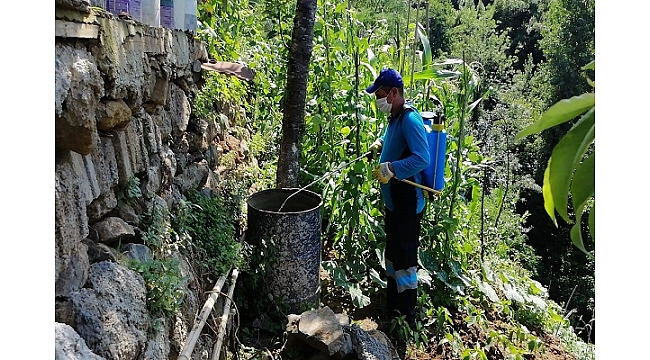 Trabzon Büyükşehir Belediyesi ilaçlama çalışmalarını sürdürüyor