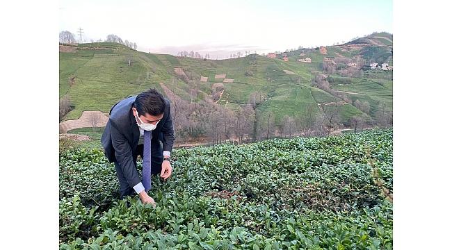 Çay üreticilerinin promosyon hakkı kime gidiyor?