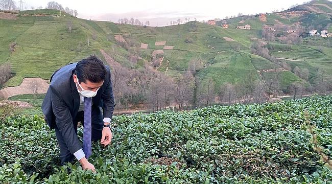 CHP Trabzon Milletvekili Kaya:
