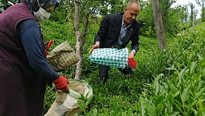 İYİ Parti Trabzon İl Başkanı Azmi Kuvvetli'den çayla ilgili önemli açıklamalar