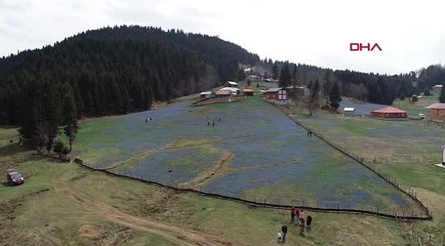 Trabzonlular kapanmada köylere ve yaylalara akın etti