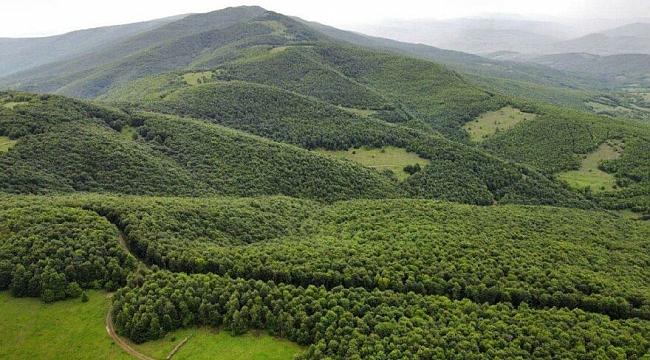 Karadeniz'de 3 ilde ormana girmek yasaklandı