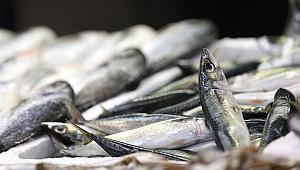 Karadeniz normale döndü, tezgahlar balıkla doldu