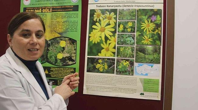 Doğu Karadeniz'in şifalı bitki florası