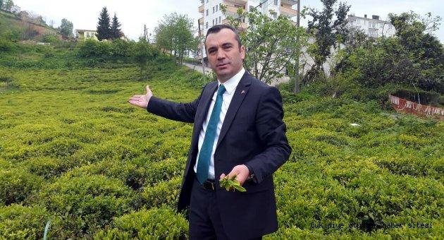 Çaya sahip çıkmak, kaçakçılığı önlemekle olur