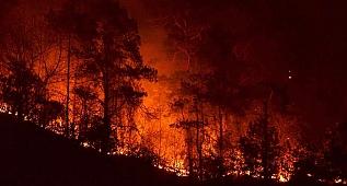 Sürmene orman yangını